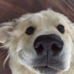 cachorro das montanhas