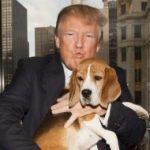 donald trump e seu cachorro beagle