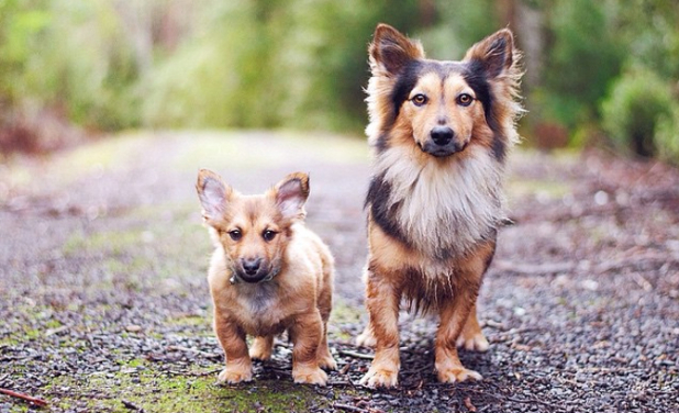 cachorro sem raca definida