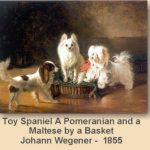 maltes cachorro historia