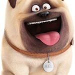 filme Pets Mel