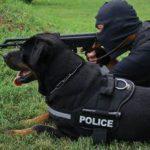 rottweiler policial