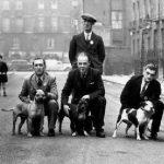 Staffordshire Bull Terrier historia