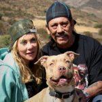 Ator Danny Trejo tem um staffordshire bull terrier