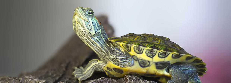 nomes de tartaruga