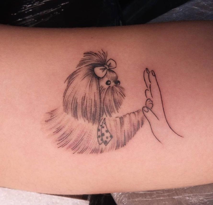 shih-tzu-tatuagens-legal
