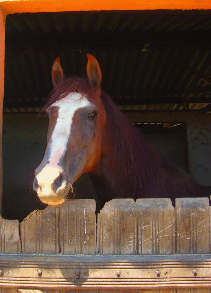 cavalo mangalarga valor