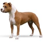 standfordshire-terrier